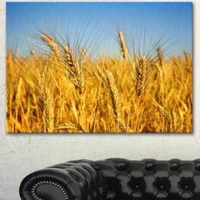 Designart Bright Golden Wheat Field Large Landscape Canvas Art