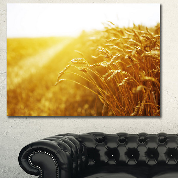 Designart Bright Sunset Over Wheat Field LandscapeCanvas Art Print 3 Panels