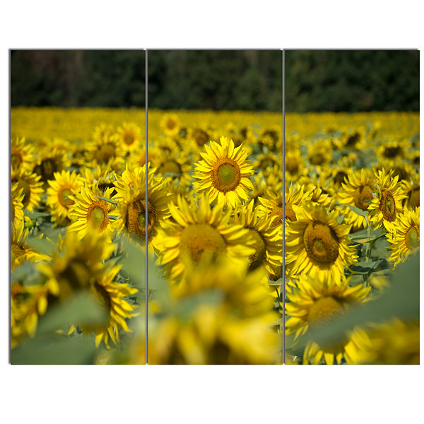 Designart Bright Yellow Sunflowers Field Floral Canvas Art Print 3 Panels