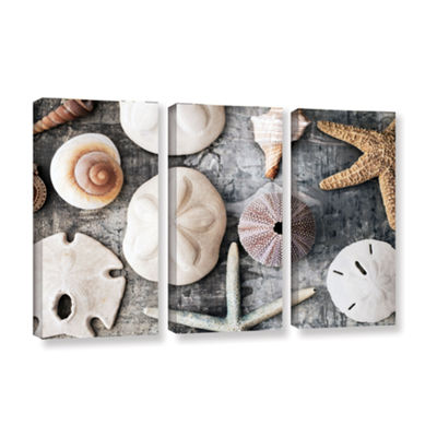 Brushstone Treasures From The Sea 3-pc. Gallery Wrapped Canvas Wall Art