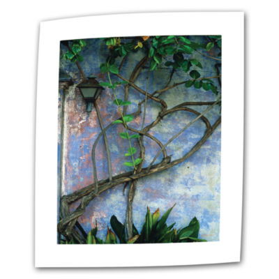Brushstone Vine And Wall Canvas Wall Art