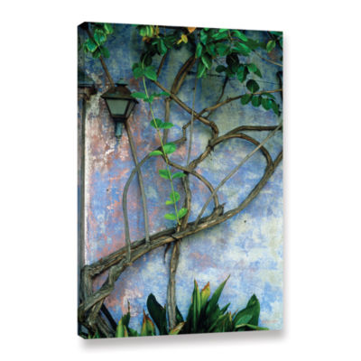 Brushstone Vine and Wall Gallery Wrapped Canvas