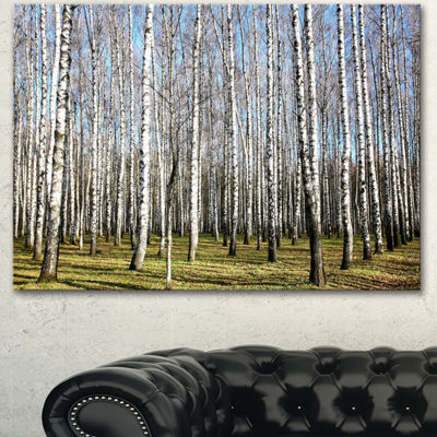 Designart Sunny November Day In Birch Grow ModernForest Canvas Art - 3 Panels