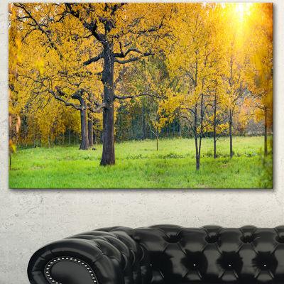Design Art Sunny Park With Oak Panorama Large Landscape Canvas Art - 3 Panels