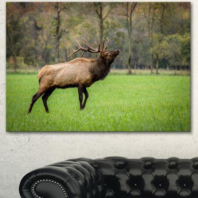 Design Art Trophy Bull Elk In Green Grassland LargeAnimal Canvas Artwork - 3 Panels