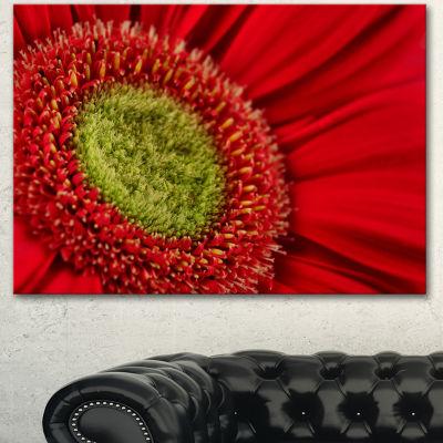 Designart Red Daisy Gerbera Flower Close Up Flowers Canvas Wall Artwork