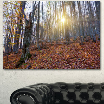Designart Setting Sun In Dense Fall Forest ModernForest Canvas Art - 3 Panels