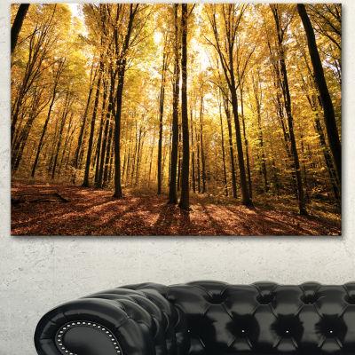 Designart Setting Sun Over Dense Fall Forest Modern Forest Canvas Art - 3 Panels