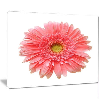 Designart Single Daisy On White Background FloralCanvas Art Print