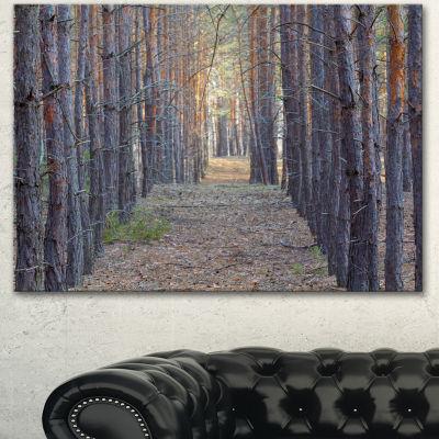 Designart Slender Pine Tree Forest Photography Modern Forest Canvas Art - 3 Panels