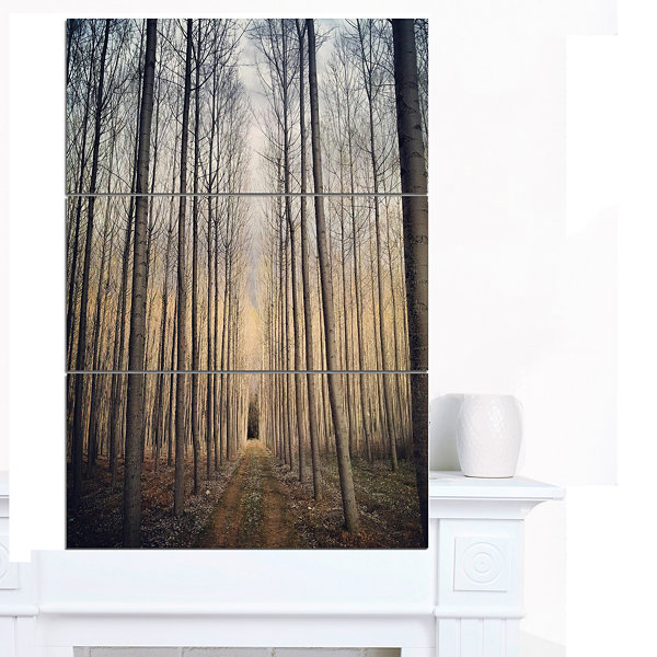 Designart Thick Forest Of Poplars At Sunset ForestCanvas Art Print - 3 Panels