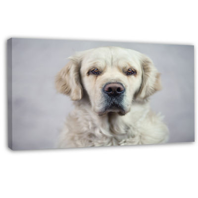 Designart Sad Looking Beautiful Dog Animal CanvasArt Print
