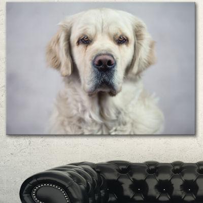 Designart Sad Looking Beautiful Dog Animal CanvasArt Print - 3 Panels