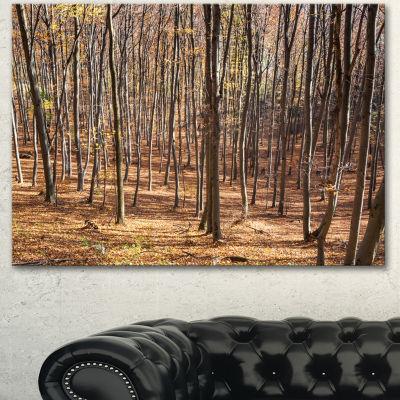 Designart Thick Carpathian Deciduous Forest ForestCanvas Art Print