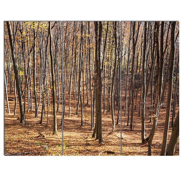 Designart Thick Carpathian Deciduous Forest ForestCanvas Art Print - 3 Panels