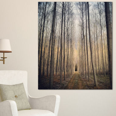 Designart Thick Forest Of Poplars At Sunset ForestCanvas Art Print