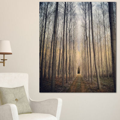 Design Art Thick Forest Of Poplars At Sunset ForestCanvas Art Print
