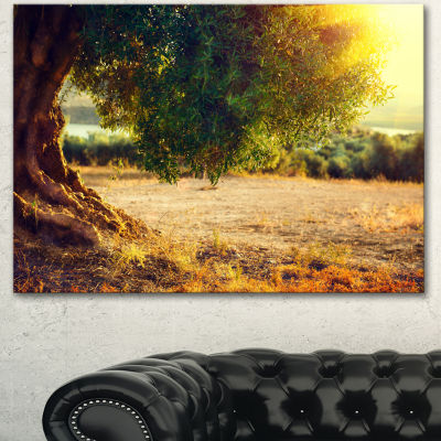 Designart Stunning Olive Trees At Sunset Large Landscape Canvas Art Print - 3 Panels