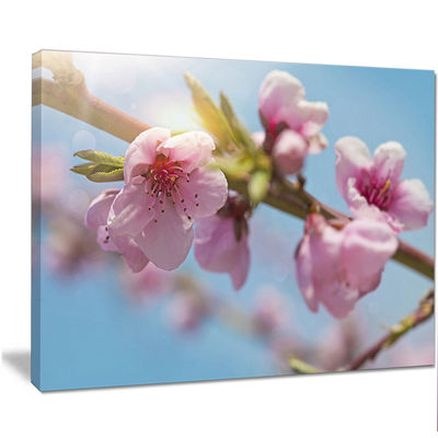 Designart Stem Of Peach Blossom Flowers Floral Canvas Art Print