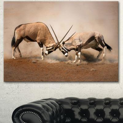 Designart Gemsbok Antelopes Fighting African WallArt Print