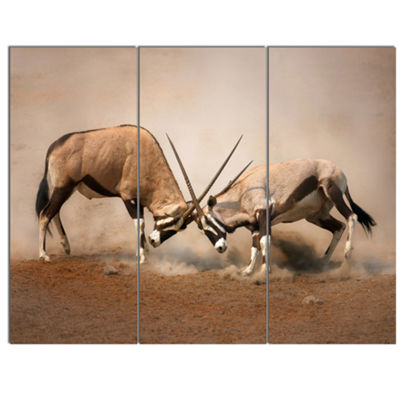 Designart Gemsbok Antelopes Fighting African WallArt Print - 3 Panels