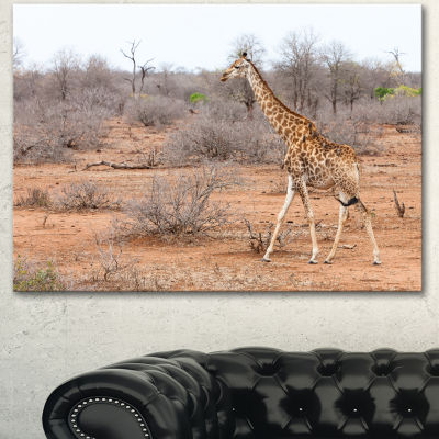Designart Giraffe Walking Through African ForestAnimal Canvas Art Print