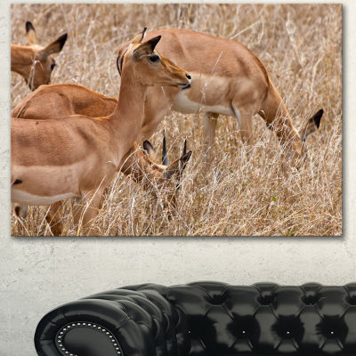 Designart Grants Gazelles Grazing In Grassland Animal Canvas Art Print - 3 Panels