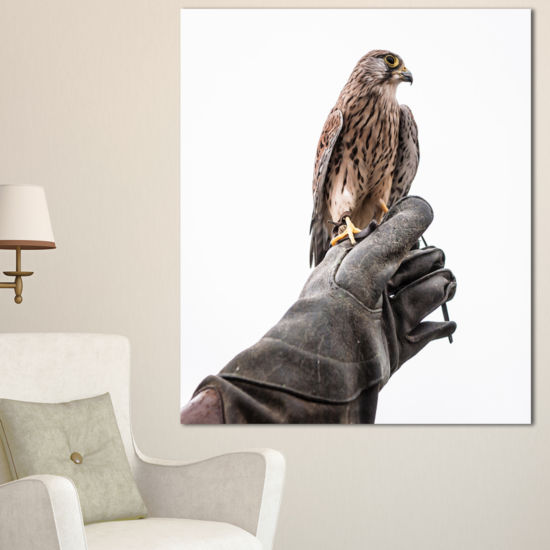 Designart Kestrel Sitting On Falconer Hand Abstract Canvas Art Print