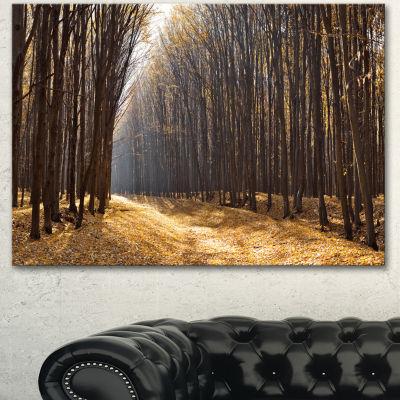 Designart Light In The Forest Path Panorama ForestCanvas Art Print