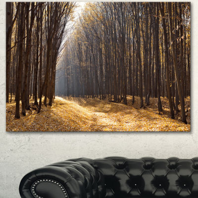 Designart Light In The Forest Path Panorama ForestCanvas Art Print - 3 Panels