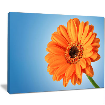 Designart Orange Daisy Gerbera Flower On Blue Floral Canvas Art Print