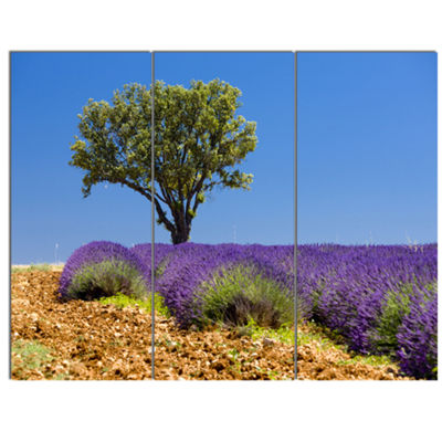 Designart Lone Green Tree In Lavender Field LargeLandscape Canvas Art - 3 Panels