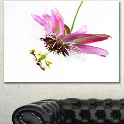 Designart Passiflora Flower Over White Large Animal Canvas Art Print - 3 Panels