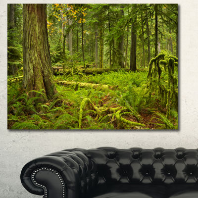 Designart Lush Rainforest In Cathedral Grove Landscape Canvas Art Print - 3 Panels