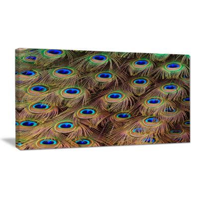 Designart Peacock Bird Tail Feathers In Close Up Animal Canvas Art Print