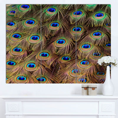 Designart Peacock Bird Tail Feathers In Close UpAnimal Canvas Art Print - 3 Panels