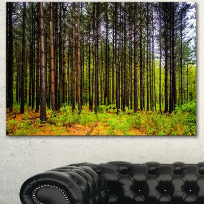 Designart Pine Trees In Michaux Forest Modern Forest Canvas Art
