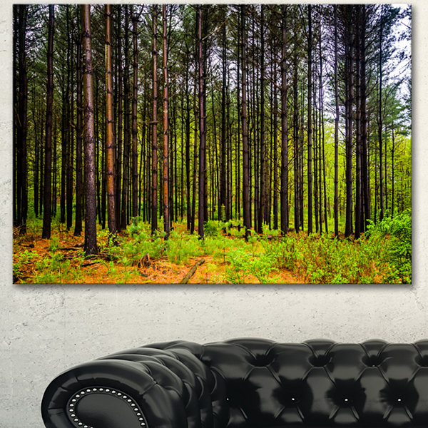 Designart Pine Trees In Michaux Forest Modern Forest Canvas Art - 3 Panels