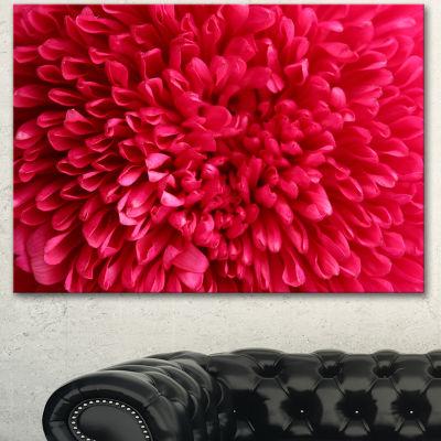 Designart Pink Aster Flower Petals Close Up LargeFloral Canvas Artwork