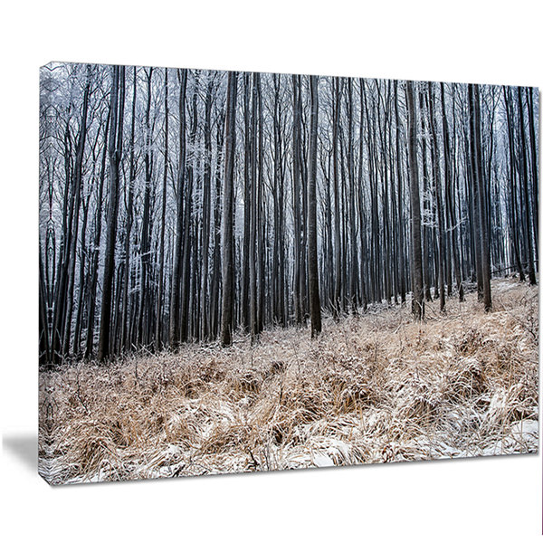 Designart Moody Cold Forest With Thick Woods Forest Canvas Art Print