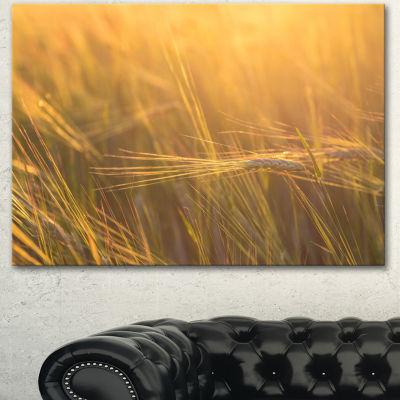 Designart Wheat Field Close Up At Sunset Large Landscape Canvas Art