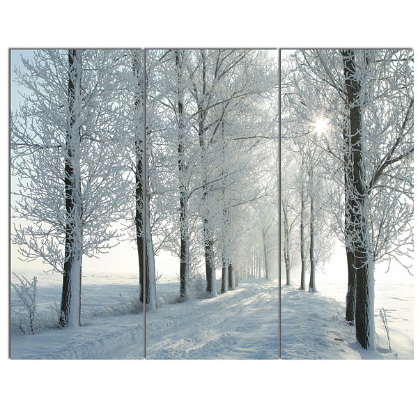 Designart Winter Trees Backlit By Morning Sun Large Forest Canvas Art Print - 3 Panels