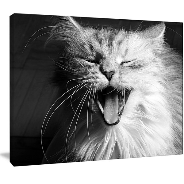 Design Art Yawning White Cat Animal Canvas Art Print