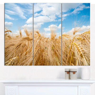 Designart Barley Field Under Blue Sky Landscape Canvas Art Print - 3 Panels