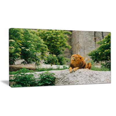 Designart Big Lion Lying On Stones In Zoo Landscape Canvas Art Print