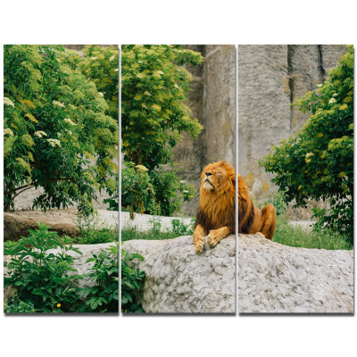 Designart Big Lion Lying On Stones In Zoo Landscape Canvas Art Print - 3 Panels