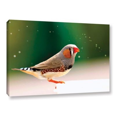 Brushstone Zebrafinch Gallery Wrapped Canvas WallArt