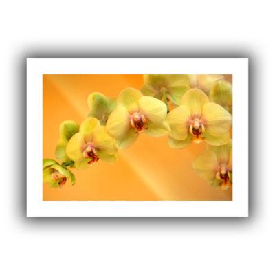 Brushstone Yellow Phalaenopsis Canvas Wall Art