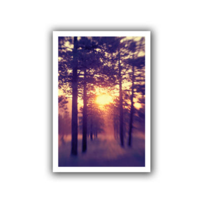 Brushstone Woodland Sunset Canvas Wall Art