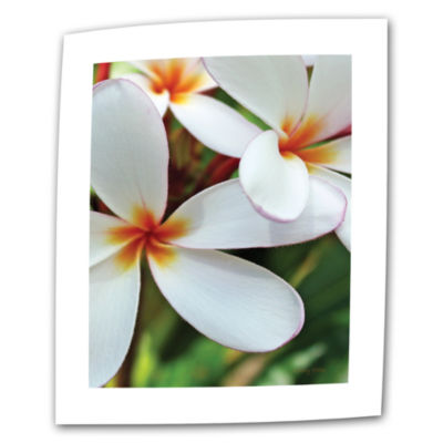 Brushstone White Plumeria Canvas Wall Art